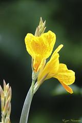 Pour le plaisir des yeux (Ezzo33) Tags: france gironde nouvelleaquitaine bordeaux ezzo33 nammour ezzat sony rx10m3 parc jardin fleur fleurs flower flowers