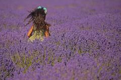 Mare viola / Purple sea (Banstead, Surrey, United Kingdom) (AndreaPucci) Tags: banstead lavender london uk surrey purple pinkfloyd child happy andreapucci