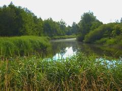 Katinger Watt 1 (Sophia-Fatima) Tags: eiderstedt nordfriesland schleswigholstein deutschland naturschutzgebiet naturerlebnisraumkatingerwatt euvogelschutzgebiet