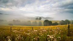 Sommermorgen in Hofen (Chrisgraphy) Tags: lörrach hofen sommer nebel natur