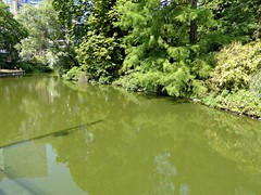 small pond in the park (Linda DV) Tags: lindadevolder lumix brussels belgium 2018 geotagged city citypark nature ribbet