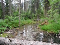 Emerald Lake Hiking Trails (Mr. Happy Face - Peace :)) Tags: canadaparks nature hiking art2018 forest trees emeraldlake summer canada rockies july emeraldlakeyohonationalparkcanada