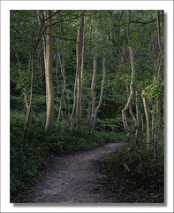 Reawaken (johnkaysleftleg) Tags: woods dene hawthorn trees path soft light canon760d canonef50mmf18