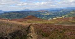 Coming soon (Elisa1880) Tags: scotland pitlochry perthshire landschap landscape schotland heide heather heath