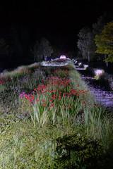 Looking up the Hill to the Cupola (sjrankin) Tags: 4august2018 edited hokkaido japan yuni yunigarden night flowers light cupola