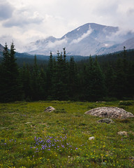 20180727-DSC04641.IG (Exiftential) Tags: mountains mountain mountainrange colorado rockies rockymountains coloradorockies continentaldivide wildflowers nature forest trees treeline outdoors