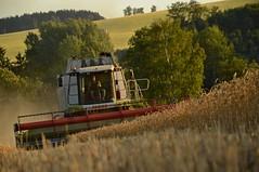 DSC_8550 (anetaležáková) Tags: summer sunset summerharvest sunnydays harvest agriculture agriphoto czechagri caseihpuma case casepuma165 caseoptum casepuma200 claas claaslexion newholland