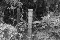 Woods Behind Fence (Gene Ellison) Tags: fence post wire woods trees vines shrubs blackwhitephotos