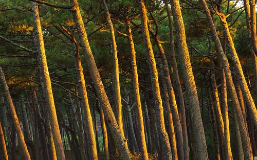 Terrific Forest
