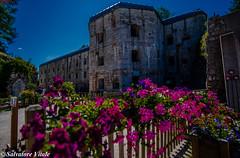 Forte Belvedere (Roman_77) Tags: trentino alpe cimbre montagna paesaggio landscape fortebelvedere fortezza storia primaguerramondiale fiori nikon nikond750 nikonclub nikonitalia d750 roman77