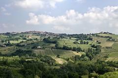 Quintissential Marche (@WineAlchemy1) Tags: tenutamusone colognola marche italy staffolo vineyards vines verdicchiodeicastellidijesi doc docg panorama cantina winery