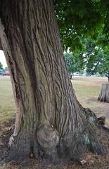 Oulton Park 210718 - DSC_0879 (Leslie Platt) Tags: exposureadjusted straightened cheshirewestchester oultonpark minicarevent minifestival treebark