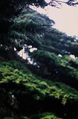 20180724-00069.jpg (tristanloper) Tags: tristanloper creativecommons film nikonf6 california bigsur pacificcoast highway1 pacificocean pfeifferbeach cypress