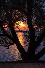 Sunset (free3yourmind) Tags: tree sunset colorful sea minsk belarus clouds cloudy