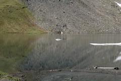 lac des Autannes (bulbocode909) Tags: valais suisse moiry grimentz valdanniviers lacdesautannes lacs montagnes nature reflets eau vert