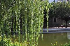 SDIM0107 (LZ775) Tags: sigma 1750mm sd1m 適馬 适马 康樂公園 honglokpark fanling 粉嶺 岭 香港 新界 hongkong newterritories x3 foveon