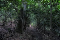 The forest tunnel 455 (Steve4343) Tags: steve4343 nikon 7200 appalachian trail cherokee national forest red green blue yellow orange white clouds sky beautiful tennessee autumn beauty johnson county lake watauga cloud colorful woods garden gardens happy leaves rocks wildlife landscape mountain tree trees grass water wood butler summer spring macro flower flowers at 455
