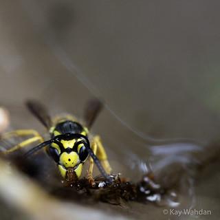 Auch Insekten haben Durst