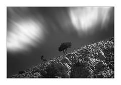 Inclined. (PvRFotografie) Tags: greece griekenland lesbos lesvos mountains bergen berg boom bomen tree trees nature natuur zwartwit blackandwhite blackwhite monochrome view views sonyilca99m2 minolta vintagelens minoltaaf70210mmf40