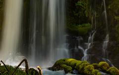 Downing Falls (Nancy King Photography) Tags: willamettenf moss oregon downingfalls waterfall downingcreek pacificnorthwest
