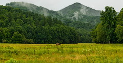 Cataloochee Valley (ArmyJacket) Tags: cataloocheevalley greatsmokeymountains gsmnp blueridgemountains appalachian northcarolina valley scenic south nationalpark trees field mountains grass sky