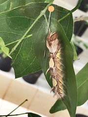 Transformation (rangelb) Tags: transformation life animal bug caterpillar butterflies