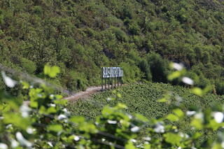 Hier wächst der SaaleUnstrut-Wein