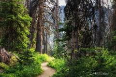 The Trail (Bruce Walter) Tags: hike getoutside getoutandplay trees forest bcparks cathedrallakespark cathedrallakeslodge cathedrals path trail greens