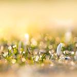 Sonnenblüte thumbnail