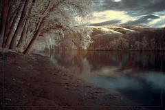 2018 04 17 Lorch am Rhein IR - 12 (Mister-Mastro) Tags: rhein rhine ufer banks reflection reflektion reflexion bäume trees arbres water wasser fluss river fullspectrum 720nm ir infrared