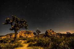 Into the Night (David Kulp Sr) Tags: nationalpark kulp joshuatree davidkulp astrophotography california