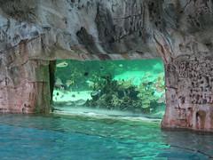 IMG_4648 (Man O' World) Tags: baha mar nassau bahamas beach turtle resort