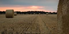 Sunset in Germany (CvK Photography) Tags: canon color corn cvk europe germany landscape nature outdoor summer sunset geeste niedersachsen duitsland de