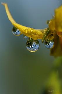 Regentropfen / raindrops (3)