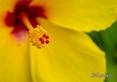 la belleza de la naturaleza (josmanmelilla) Tags: flor flores melilla color colores naturaleza pwmelilla españa sony flickphotowalk pwdmelilla pwdemelilla