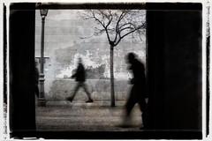Exit Ghost (una cierta mirada) Tags: ghost people tree motion bnw blackandwhite alcalá alcaládehenares bw canoneos6def100mmf28l macroisusm canon eos 6d ef100mm f28l