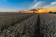 Harvest time (Andy barclay) Tags: tree field harvest straw crop farm farming sky landscape lincolnshire nikon d7100 sigma sunset clouds