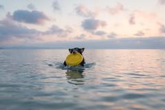 30/52 Leia & summer moments (shila009) Tags: leia perro dog roughcollie beach playa sunrise light sea luces amanecer dogphotography water agua 3052 52weeksfordogs