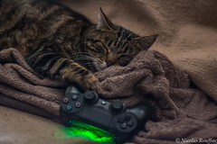 Geek cat (Nicolas Rouffiac) Tags: geek cat cats chat chats geeks funny fun