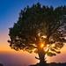 Tree between two Islands