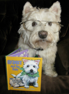 4/12B ~ Riley reading about the adventures of McDuff, the westie!