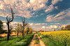Two Sides To Every Story (Andy Brandl (PhotonMix)) Tags: landscape opposingsides opposites divided path road nature oldnew sky clouds rapeflowers germany photonmix