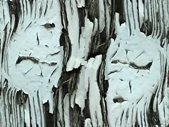 Two Faces In One (gripspix (OFF)) Tags: 20180420 haigerloch badenwürttemberg germany deutschland texture textur garagedoor garagentor imagination vorstellungskraft peelingpaint abblätterndefarbe