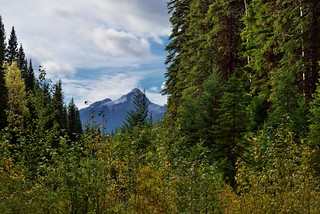 Lush and Vibrant Greens and a View to Mountain Peaks and Some Blue Skies (Yoho National Park)