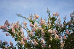 DSC04191 (@saka) Tags: autoupload flowers 69646981 leaves 1030 street 346