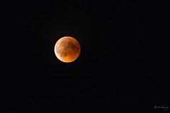SNY_1311-5.jpg (steph-55) Tags: nikond800 step55 lune eclipselunaire eclipse nikon200500mmf56 meuse lorraine moon déclicenmeuse ciel nuit