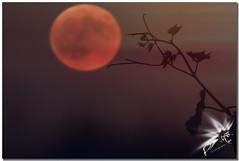 Blood Moon (UfoSp@in ஐ★Freelance Photo★ஐ) Tags: eclipse 2018 bloodmoon lunadesangre piedrabuena castillalamancha canoneosm50 ef100400mmf4556lisusm night nubes negro julio2018 colors colores view best neon myself mac macbookpro macbook live love luz light lightroom lens photography photoshop photomatrix paint obturador instagram iso iglesia ufospin years texturas travel textura topaz treasure tool españa exposure explore espagne europe estrellas wind art alien arte af apple spain sky spanien spagna style diafragma fotografia lights hdr noche pueblos sierradelacruz zoom vanguard full equipe old summer city contrast