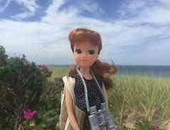 At Race Point (Foxy Belle) Tags: race point provincelands provincetown mass ma sand flower roses beach ocean sea landscape doll licca nina ballerina yukkochan