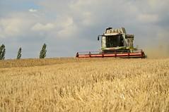 DSC_8302 (anetaležáková) Tags: summer sunset summerharvest sunnydays harvest agriculture agriphoto czechagri caseihpuma case casepuma165 caseoptum casepuma200 claas claaslexion newholland