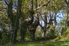 agorregi (31) (Luigy_ugaroi) Tags: aia gipuzkoa iturraran jardinbotanico pagoeta bosque otoño